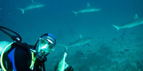 IDC PADI Courses in the Caribbean, become Instructor with Coral Point Diving